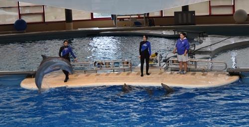 Dolphin Show at National Aquarium