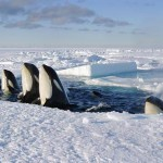 What to Watch This Weekend: Discovery's 'Frozen Planet'