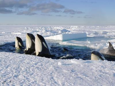 Frozen Planet on Discovery