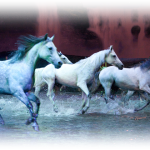 Plan Your Weekend: Odysseo by Cavalia at the National Harbor