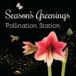 US Botanic Gardens Season's Greenings 2015